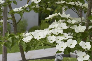 Frühlingspflege im Garten