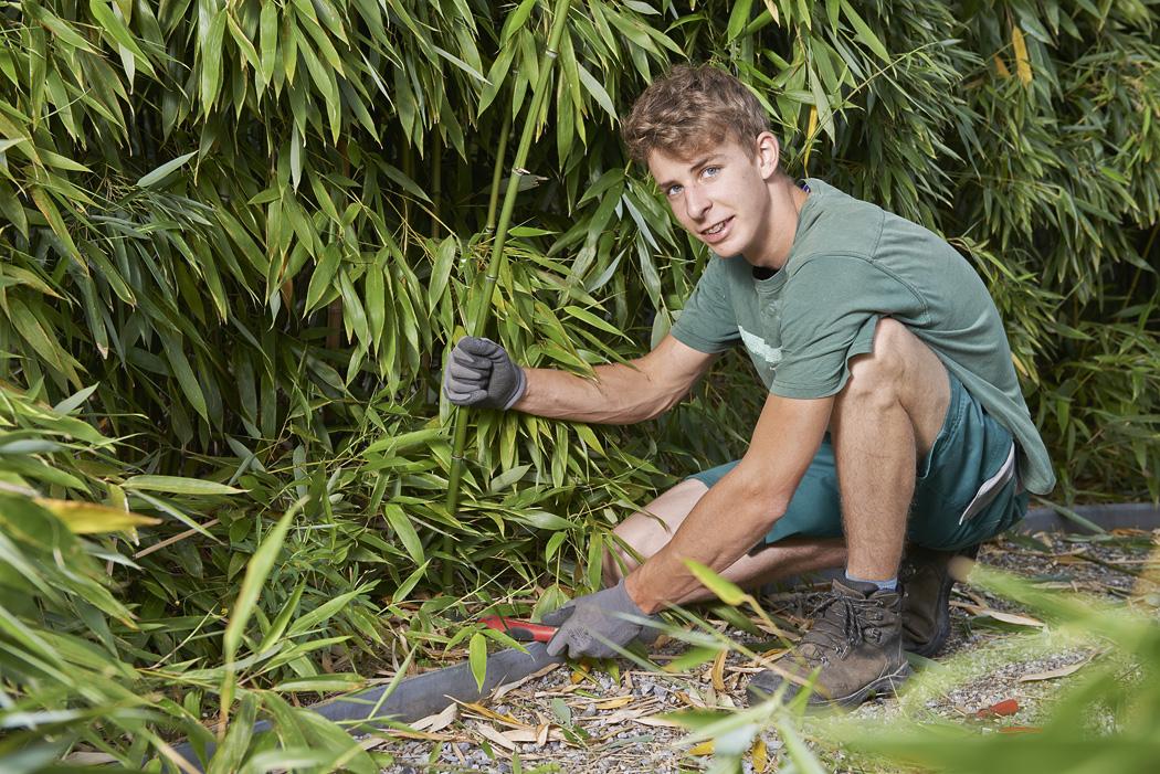Gärtner  Gärten pflegen - Gräff - Ihr Gärtner
